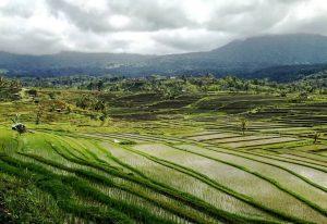 Bali Half Day Tour Package. Bali jatiluwih rice terrace