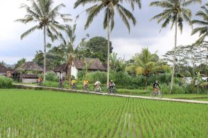 Bali cycling tour. Bali eco cycling. Kintamani to ubud