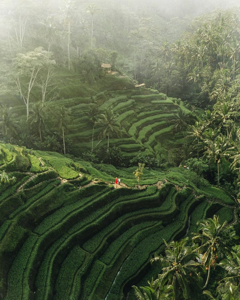 Best rice fields in Ubud. Tegallalang Rice Terrace walk Tegallalang 1
