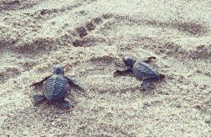 Bali Tour 5 Days 4 Nights Turtle Island Bali