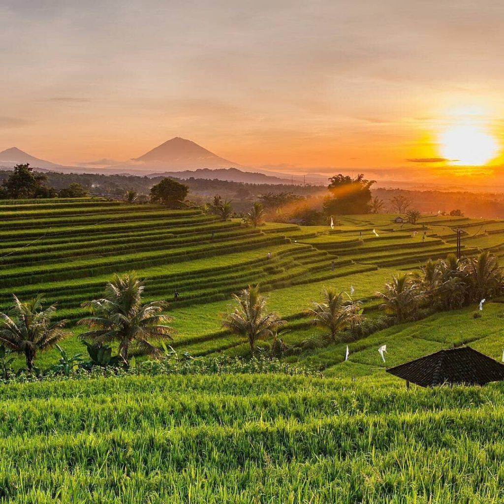 Ubud Waterfall Tour & Ubud Rice Fields Tour Bali Ubud Rice Fields