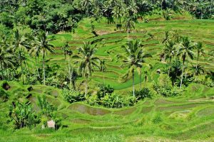 What to do in Ubud. Best Resorts in Ubud. Ubud attractions - goa gajah